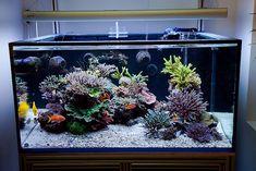 5-3 theory Reefs Magazine - Aesthetics of Aquascaping