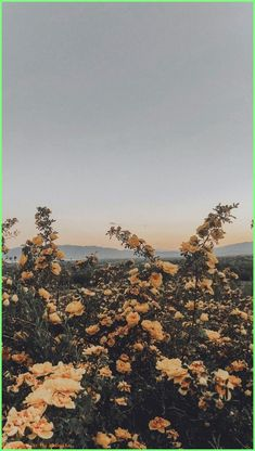 These views flower aesthetic, yellow flower wallpaper, aesthetic lockscreens, aesthetic backgrounds, aesthetic Tumblr Wallpaper, Screen Wallpaper, Nature Wallpaper, Wallpaper Backgrounds, Wallpaper Patterns, Wallpaper Quotes, Painting Wallpaper, Painting Canvas, Canvas Art