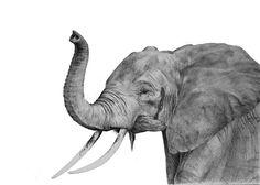 ¿Habéis visto alguna vez un abrazo de elefante?  Elefante por Aythamy Armas, grafito sobre papel 70x50cm. Además de este impresionante original, también podéis encontrar prints de su obra.