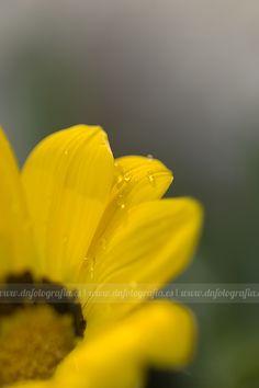 dnfotografia I photography & design