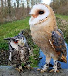Owl erotik OWL Erotik