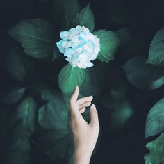 60 Ideas for plants photography life Beautiful Hands, Beautiful Flowers, Hand Photography, Hand Flowers, My Flower, Cool Pictures, Photos, Photo And Video, Aesthetics