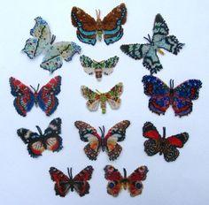 12 Multicoloured Lepidopteras