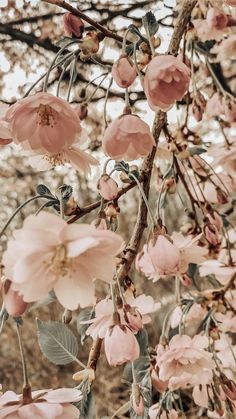 Pretty Wallpapers Backgrounds For iPhone: Pretty Wallpapers Flowers - Pink Wallpapers For iPhone / Pink Flowers Wallpaper Wallpaper Sky, Flower Phone Wallpaper, Iphone Background Wallpaper, Nature Wallpaper, Beautiful Wallpaper, Pretty Phone Wallpaper, Wallpaper Quotes, Walpaper Phone, Vintage Phone Wallpaper