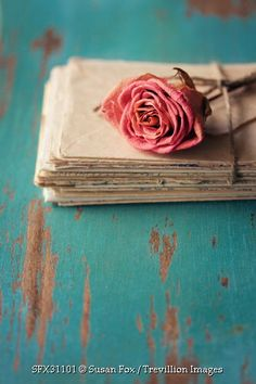 Trevillion Images - pink-rose-with-letters