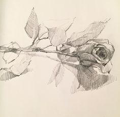 Red Rose. #drawing #sketchbook #sketch #pencil #art by Sarah Sedwick ©2015