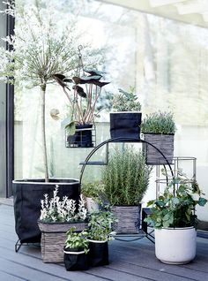 Mini garden. Stylish and relaxing.