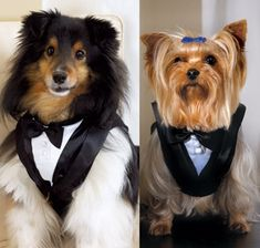 The Pet Tux will garb your pet in the style they need to accompany you in your wedding. The pet tux is designed to look like a black tuxedo jacket with a white shirt and black bow tie. Tuxedo Wedding, Dog Wedding, Wedding Humor, Wedding Ideas, Wedding Tuxedos, Wedding Ceremony, Wedding Attire, Dream Wedding, Wedding Inspiration
