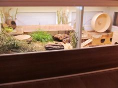 Amazing natural themed hamster habitats