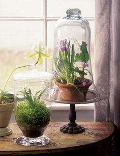 terrarium - I need this so I can have plants inside the house without the cats eating them.