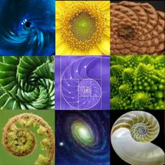 The Fibonacci Spiral in action. I'm a designer, and this is the ultimate design (and, for the record, this is the only god I need).