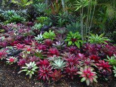 Planting under liquid Ambers - bromeliads