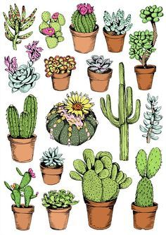 Cactus illustration by May van Millingen                                                                                                                                                      More
