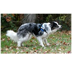 Medium Dog Harness | Mighty Mite Dog Gear