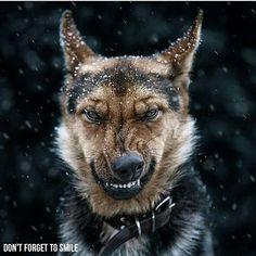 Don't forget to smile   #wolf #dog #smile #shepard #germanshepard #worklife #seo #searchengineoptimization #businessowner #opportunities #investing #luxury #onlinemarketing #finance #ferrari #socialnetworking #onlinemarketer #success #entrepreneur #networkingevents #business #marketing #instadaily #networkingbusiness #networkingparty #entrepreneurship #networkingevent #leadership #networkingsaveslives #networkingbiz