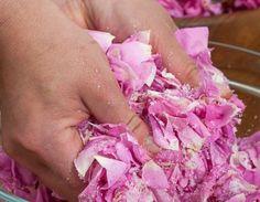 Utiliser les pétales des roses du jardin en cuisine : recettes de confiture de rose, de gelée de pétales de rose, de pétales de rose cristallisés, de sirop de rose...