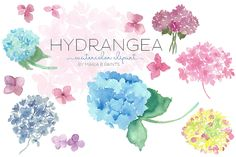 Watercolor Clip Art - Hydrangea by Maria B. Paints on Creative Market