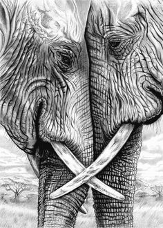 Elephants in pencil and charcoal 5 x 7 Giclee
