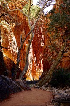 Australian Desert, Australian Bush, Australia Travel, Western Australia, Landscape Photos, Landscape Photography, Australia Landscape, Acrilic Paintings, Classic Sailing