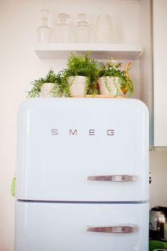 plants on the fridge