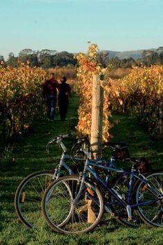 Martinborough Wine Centre Cycle Hire