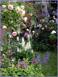 hopefully in a few years, my garden will be full & gorgeous like this!!!