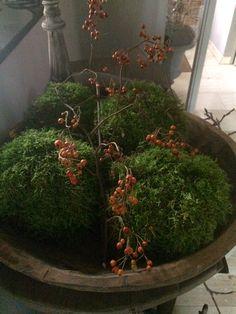 Prop van kranten papier omwikkelen touw en ver volgens met mos! 2 a 3 x per week bevochtigen met plantenspuit