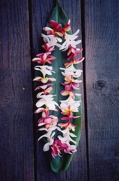 Plumeria Lei by Shopify | North Shore Buds & Blooms