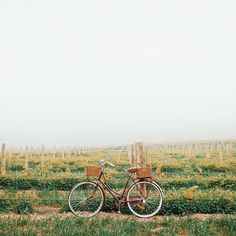 Bicycle rides while exploring so many beautiful vineyards throughout the Barossa. This was taken while having fun at @jacobscreekwine.  @southaustralia @flightcentreau #curiousatheart #openmyworld