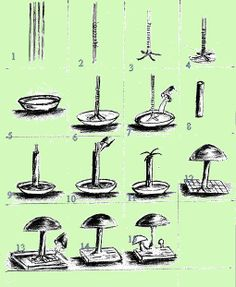 mushrooms made from concrete | How to Make Cement Mushrooms http://theperanakanconnection.blogspot ...
