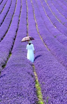 Lavender Fields In Provence, France. Don't love lavender scent that much but this photo is breathtaking! Beautiful World, Beautiful Places, Simply Beautiful, Foto Poster, Parasols, Umbrellas, All Things Purple, Purple Stuff, Shades Of Purple