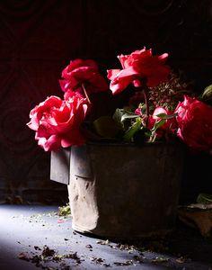 Kate Mathis Photography - BOTANICAL - 10