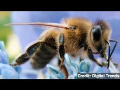 VIDEO  Bee Venom Can Kill HIV,     Study Says  Scientists from Washington University School of Medicine in St. Louis have discovered bee venom can kill the HIV virus without harming the body.