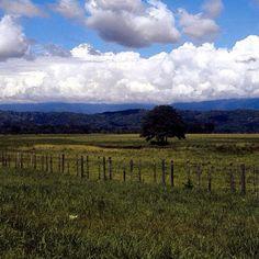 Llano venezolano. Foto: @cheorodriguezq