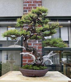Image #bonsaitrees