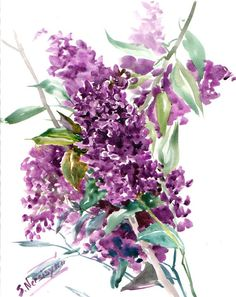 Lilacs Original watercolor painting 14 X 11 in by ORIGINALONLY, $61.00