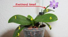 Chcete, aby vám orchidea kvitla celý rok? Stačí sa pri každej rastline držať tejto zásady, nič viac - môže mať aj 40 kvetov! Plant Leaves, Home And Garden, Flowers, Gardening, Plant, Horoscope, Garten, Florals, Lawn And Garden