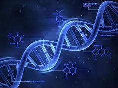 What Is DNA?: 3-D DNA Structure