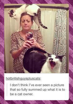 What it is to be a cat owner // funny pictures - funny photos - funny images - funny pics - funny quotes - #lol #humor #funnypictures