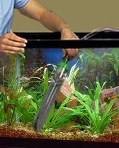 CLEANING FOR HEALTHY FISH: A step-by-step guide on how to easily clean your aquarium. Unplug everything. Remove 25-50% (depends on tank/fish) with a gravel siphon (vacuum gravel). Remove algae from glass with a soft sponge or scraper (a cotton t-shirt or paper towel also works). Clean filter media/parts and decorations  in dirty/removed tank water. Add fresh water at the same temp and treated with chlorine remover (Prime or NovAqua/AmQuel). Put/plug everything back in/on. Done! Repeat…