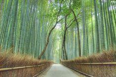 Floresta de bambu >São 16 km² de uma floresta de bambu que coloca o Japão nesta lista. Localizada próxima a cidade de Kyoto (onde foi assinado o famoso Protocolo de Kyoto), a floresta se destaca mais ainda por um detalhe que não aparece na foto: a sinfonia criada pela passagem do vento entre os bambus.