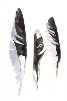 Magpie Feather painting 3 print of watercolor by Splodgepodge, $15.00