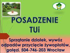 Sadzenie roślin, drzew, kwiatów. tel 504-746-203. Usługi ogrodnicze, prace ogrodowe Wrocław, cennik tel 504-746-203. Cena posadzenia tui, żywopłotu, drzew - na tel 504-746-203.