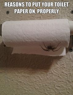 If you don't a spider will get you!!!