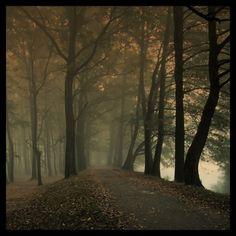 1138559827_gal_757762.jpg (road,trees,mist,forest)