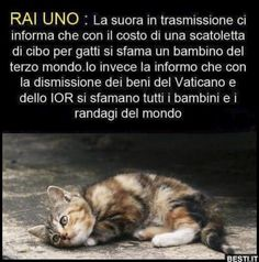 Cute Cats And Dogs, Cats And Kittens, Like Animals, Animals And Pets, Love Pet, I Love Dogs, Verona, Respect Life, Kitten Love