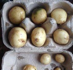 How to Grow Heritage Seed Potatoes
