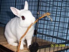 Willow braches braided to a cage make a perfect and joyfill rabbit toy.