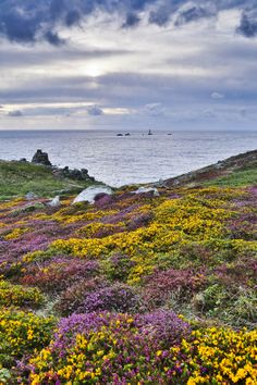 Vibrant gorse and a rugged Cornish headland make for some breath-taking viewing here at Land's End! Credit: David Chapman Photography