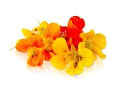 Edible Nasturtium Flowers & Edible Nasturtium Leaves  - A great way to dress up a salad!